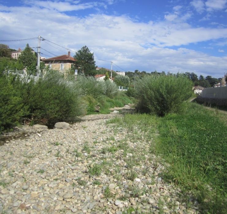 Malgré la sécheresse, la végétation se porte bien en aval d'Oullins