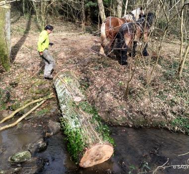 Ruisseau du Ratier : des chevaux au service de la rivière