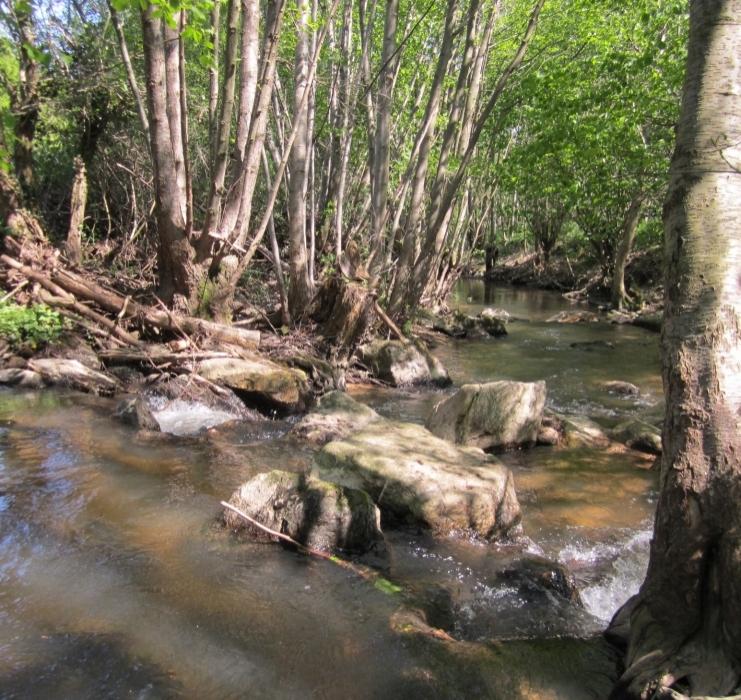 Conversations autour de la gestion des cours d'eau