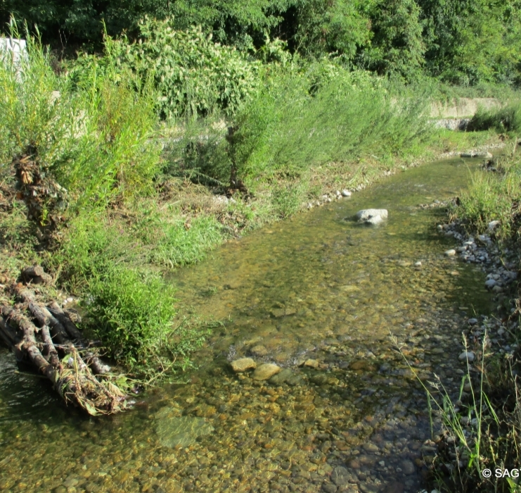 La biodiversité au cœur d'Oullins !